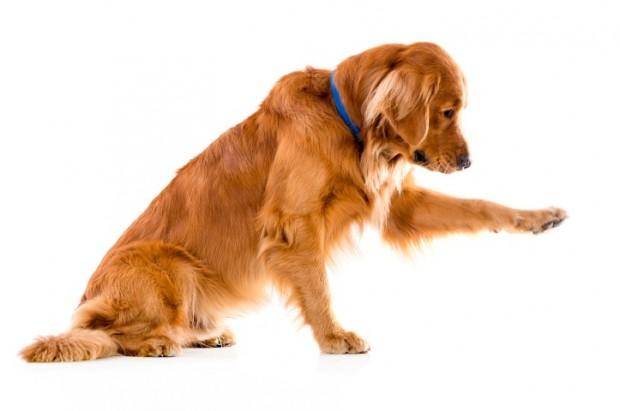 Foto de Atenção: O calor pode queimar as patinhas do seu cão