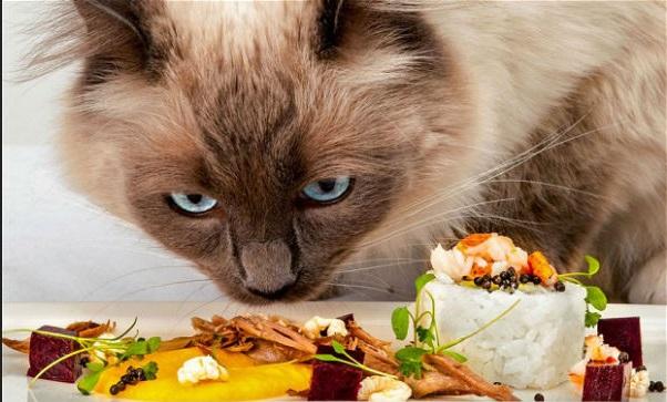 Foto de Apaixonados por gatos: atenção aos alimentos proibidos