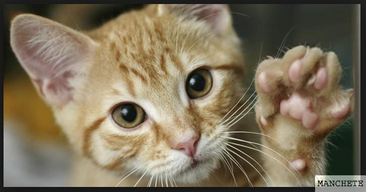 Foto de Gato novo em casa?