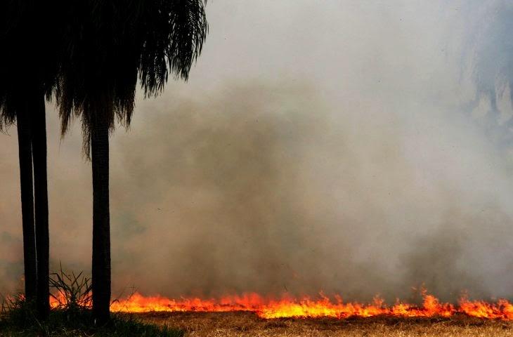 Foto de Bombeiros de Maringá combatem fogo no Pantanal